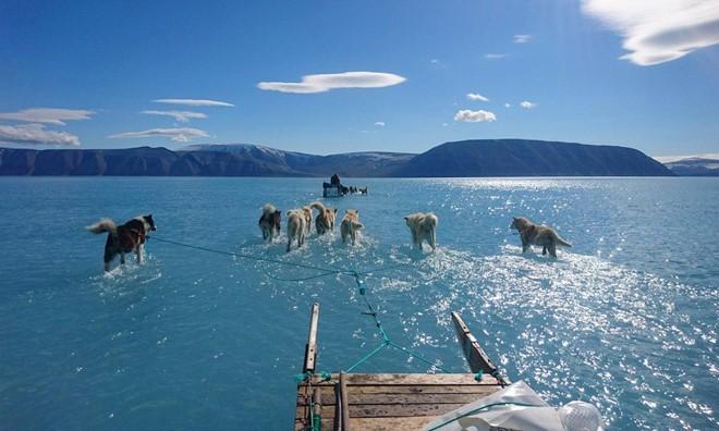 Đây là nguyên nhân khiến chó kéo xe ở Greenland đứng trước nguy cơ bị thất nghiệp - Ảnh 1.