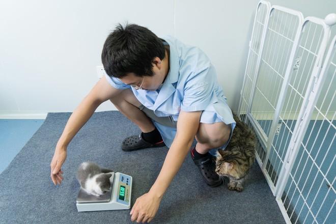 Vào ngày 21 tháng Bảy năm 2019, Bé Tỏi - con mèo nhân bản đầu tiên của Trung Quốc ra đời - Ảnh 3.