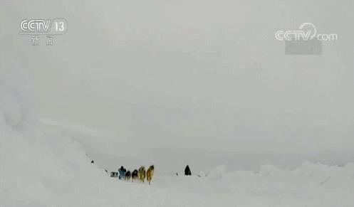 Đây là nguyên nhân khiến chó kéo xe ở Greenland đứng trước nguy cơ bị thất nghiệp - Ảnh 3.