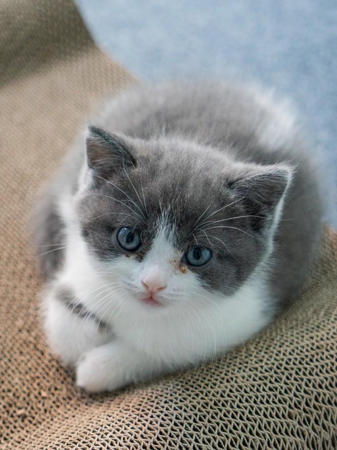 Vào ngày 21 tháng Bảy năm 2019, Bé Tỏi - con mèo nhân bản đầu tiên của Trung Quốc ra đời - Ảnh 5.