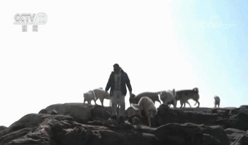 Đây là nguyên nhân khiến chó kéo xe ở Greenland đứng trước nguy cơ bị thất nghiệp - Ảnh 5.