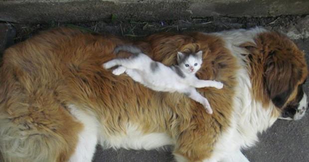 Những bức ảnh chứng minh chó mèo không ghét nhau như chúng ta tưởng - Ảnh 1.