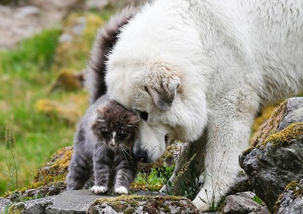 Những bức ảnh chứng minh chó mèo không ghét nhau như chúng ta tưởng - Ảnh 13.