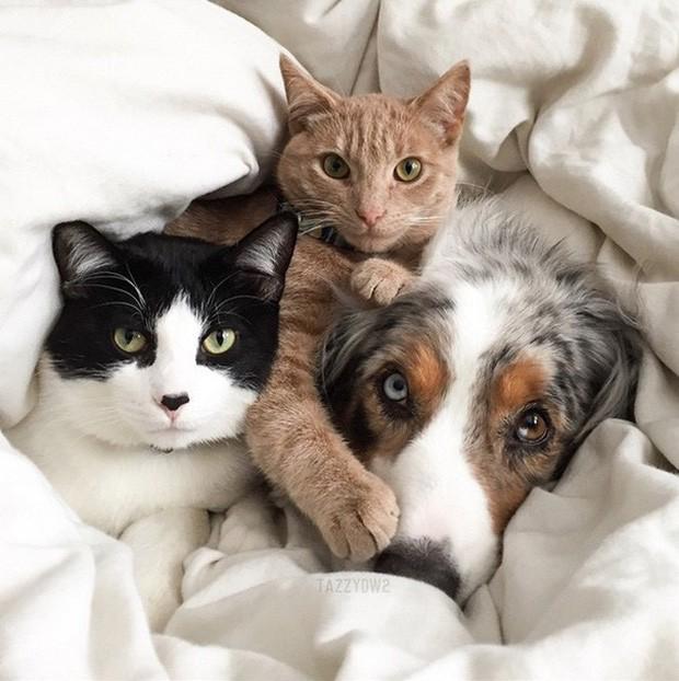 Những bức ảnh chứng minh chó mèo không ghét nhau như chúng ta tưởng - Ảnh 15.