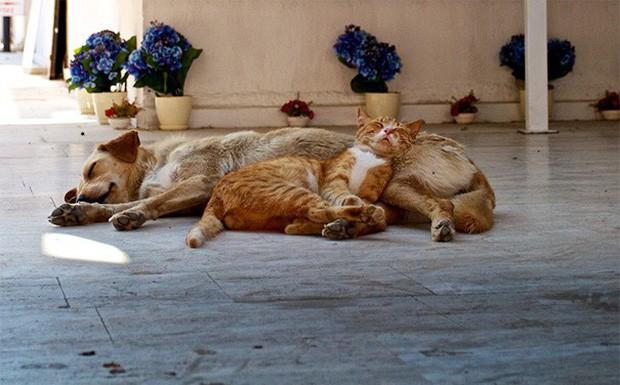 Những bức ảnh chứng minh chó mèo không ghét nhau như chúng ta tưởng - Ảnh 3.
