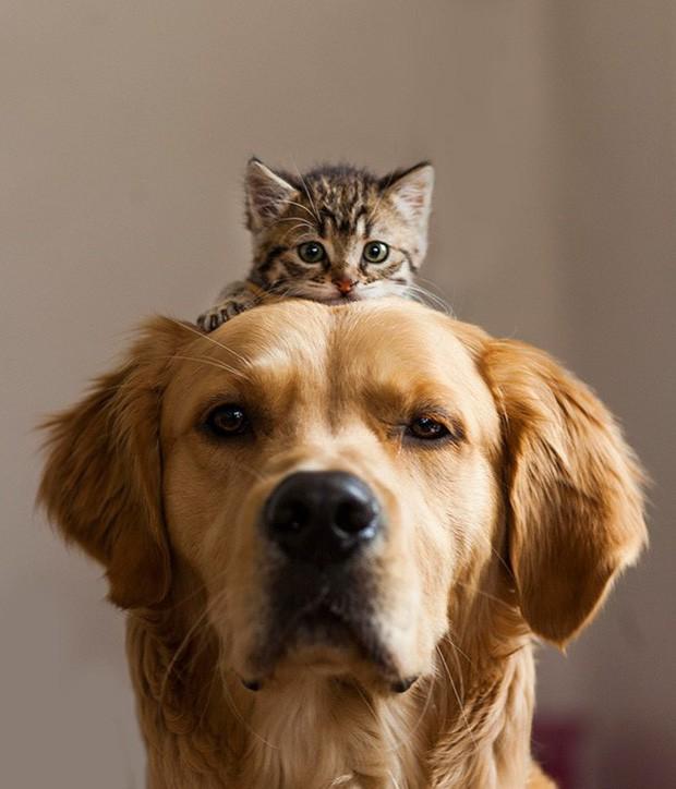 Những bức ảnh chứng minh chó mèo không ghét nhau như chúng ta tưởng - Ảnh 5.