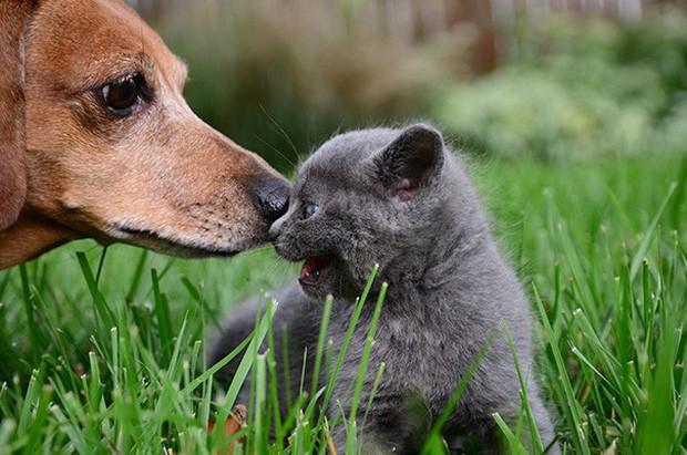 Những bức ảnh chứng minh chó mèo không ghét nhau như chúng ta tưởng - Ảnh 6.