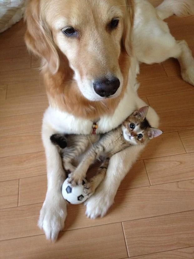 Những bức ảnh chứng minh chó mèo không ghét nhau như chúng ta tưởng - Ảnh 10.
