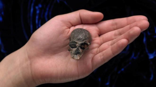 Hộp sọ kì lạ của loài khỉ cổ đại tiết lộ bí mật về cách thức bộ não của các loài linh trưởng phát triển - Ảnh 1.