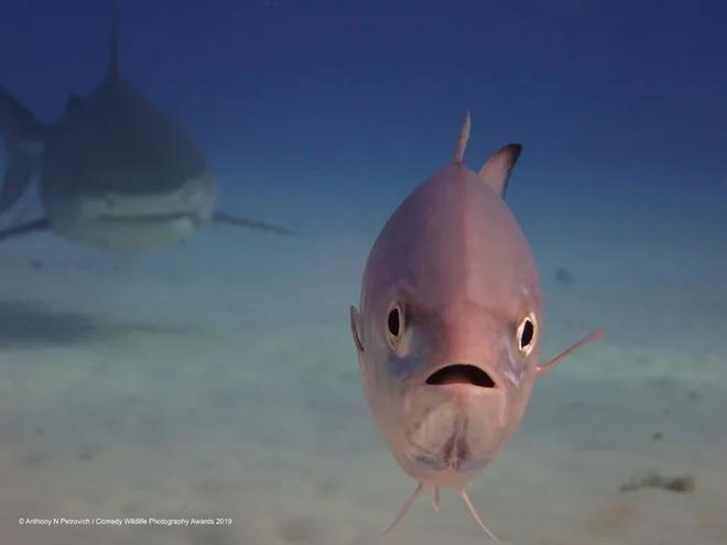 Những bức ảnh siêu hài hước trong chung kết cuộc thi nhiếp ảnh động vật hoang dã Comedy - Ảnh 11.