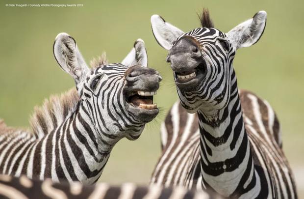 Những bức ảnh siêu hài hước trong chung kết cuộc thi nhiếp ảnh động vật hoang dã Comedy - Ảnh 17.
