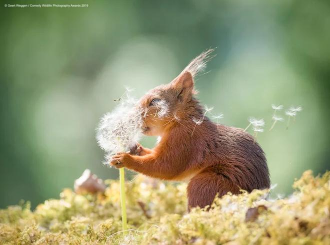 Những bức ảnh siêu hài hước trong chung kết cuộc thi nhiếp ảnh động vật hoang dã Comedy - Ảnh 18.