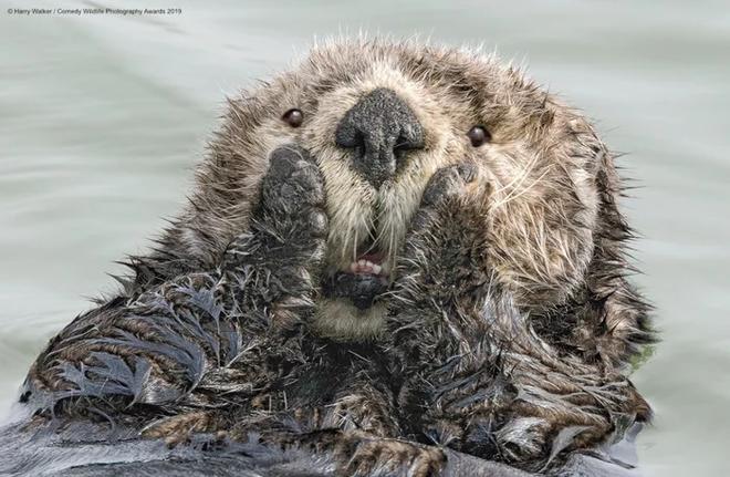 Những bức ảnh siêu hài hước trong chung kết cuộc thi nhiếp ảnh động vật hoang dã Comedy - Ảnh 3.