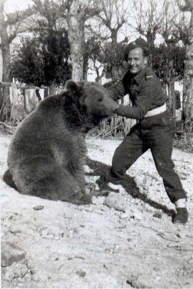 Cuộc đời kì lạ của binh nhì gấu Wojtek: Sống và chiến đấu như người lính thực thụ rồi trở thành anh hùng đáng tự hào của người Ba Lan - Ảnh 2.