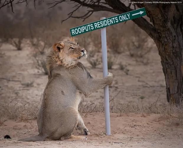 Những bức ảnh siêu hài hước trong chung kết cuộc thi nhiếp ảnh động vật hoang dã Comedy - Ảnh 22.