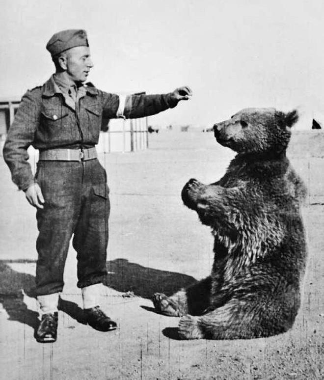 Cuộc đời kì lạ của binh nhì gấu Wojtek: Sống và chiến đấu như người lính thực thụ rồi trở thành anh hùng đáng tự hào của người Ba Lan - Ảnh 3.