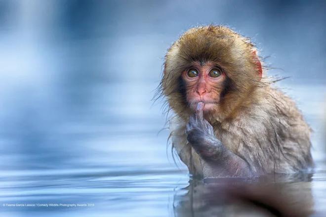 Những bức ảnh siêu hài hước trong chung kết cuộc thi nhiếp ảnh động vật hoang dã Comedy - Ảnh 5.