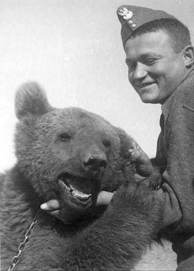 Cuộc đời kì lạ của binh nhì gấu Wojtek: Sống và chiến đấu như người lính thực thụ rồi trở thành anh hùng đáng tự hào của người Ba Lan - Ảnh 5.