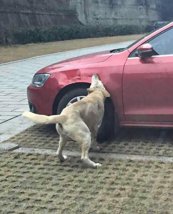 Đá con chó hoang để giữ chỗ đỗ xe, người đàn ông bị trả thù theo cách không ngờ - Ảnh 2.
