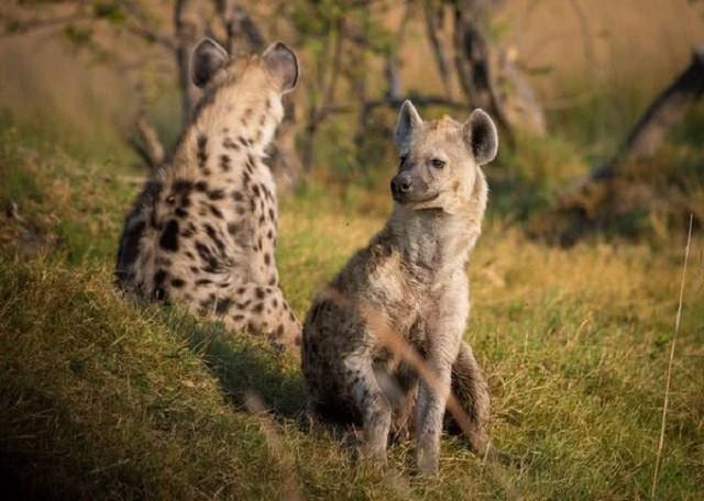 Những loài động vật phát ra tiếng kêu lớn nhất Trái Đất - Ảnh 1.