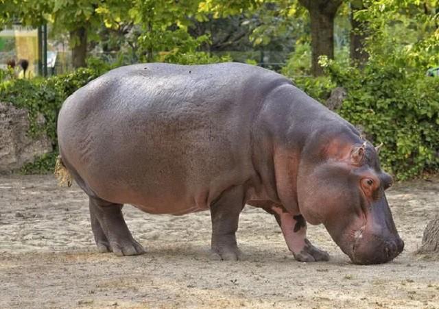 Những loài động vật phát ra tiếng kêu lớn nhất Trái Đất - Ảnh 2.