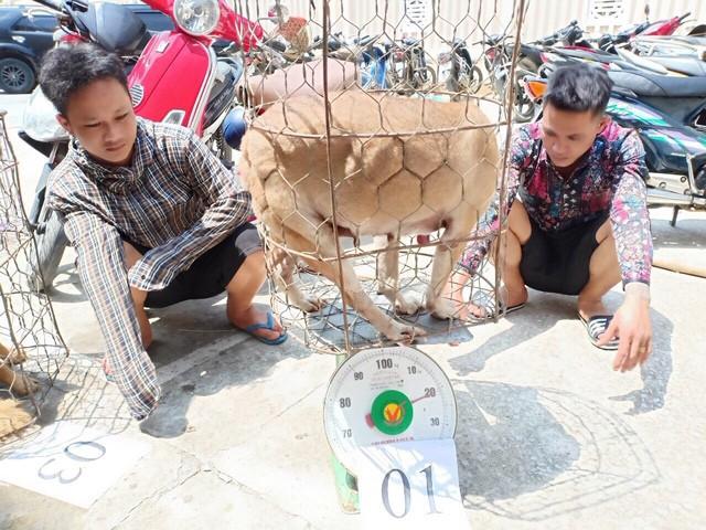 Chi tiết phương thức hoạt động của băng nhóm trộm chó quy mô lớn ở Thanh Hóa - Ảnh 4.