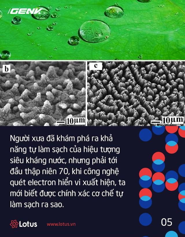 Hiệu ứng Lotus chính là lời lý giải khoa học cho câu ca dao gần bùn mà chẳng hôi tanh mùi bùn - Ảnh 4.