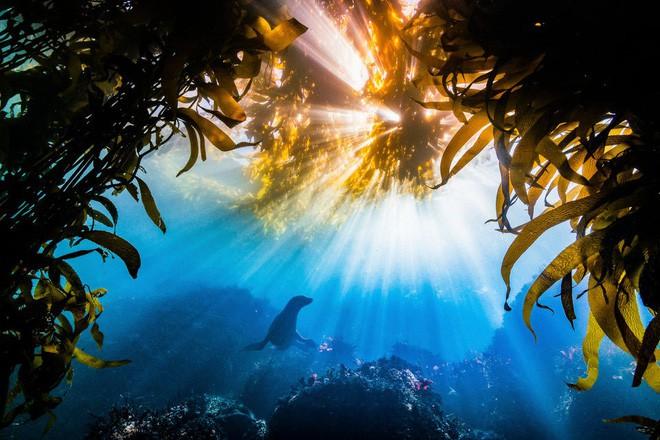 Cùng xem 30 tác phẩm tuyệt đẹp tại 1 trong những cuộc thi nhiếp ảnh thiên nhiên lớn nhất thế giới, người Việt Nam xuất sắc giành giải nhất hẳn hoi - Ảnh 30.