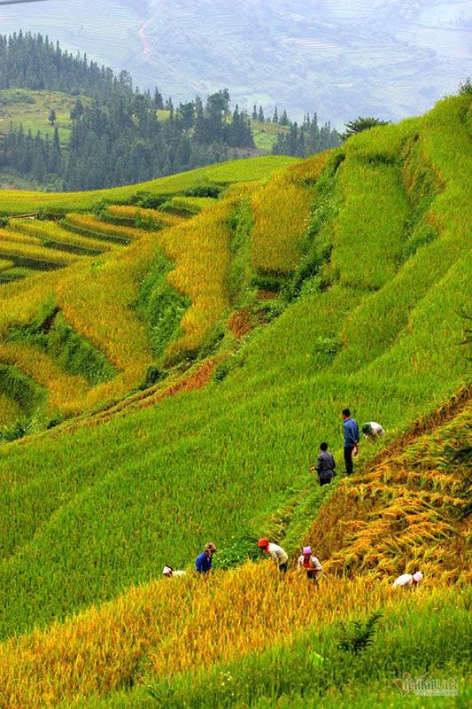 Cảnh sắc đẹp nhất thế giới mỗi năm 1 lần chỉ có ở Việt Nam - Ảnh 11.