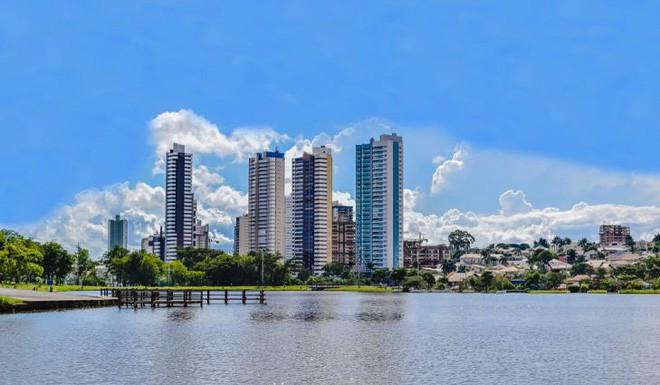 Amazon cháy khiến vẹt Brazil tràn vào thành phố: Được con người yêu thương chiều chuộng, nhưng nguy cơ mất mạng cũng rất cao - Ảnh 4.