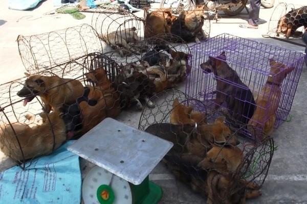 Vụ trộm hàng trăm tấn chó: Cẩu tặc đã mang theo cả kích điện, ớt bột, mảnh chai đập vỡ - Ảnh 3.