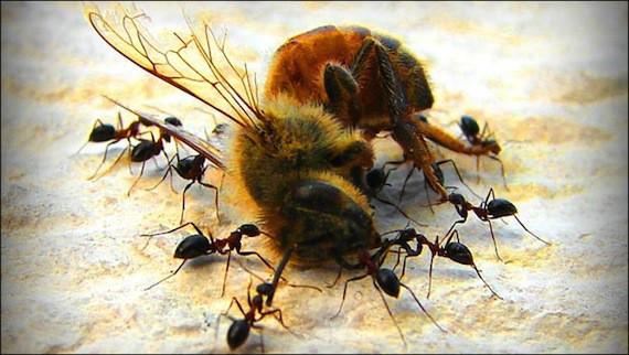 Nếu loài ong tuyệt chủng, rất có thể nhân loại chỉ tồn tại được thêm 4 năm - Ảnh 2.