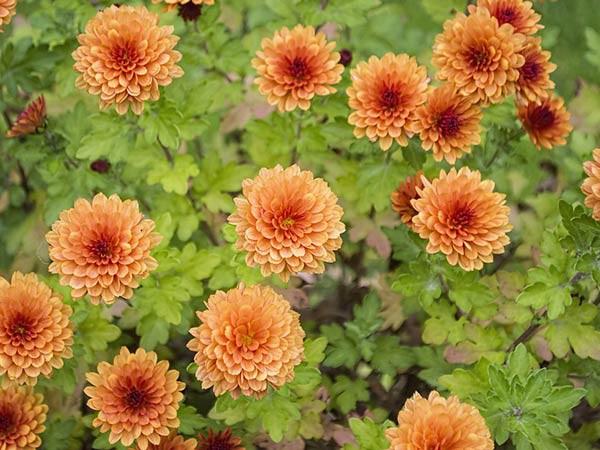 8 loại cây nên trồng trong nhà để thanh lọc, làm sạch không khí - Ảnh 3.