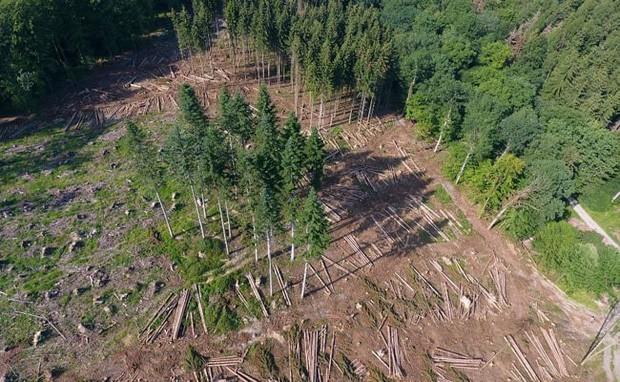 Gần 1/2 cây cối tại châu Âu sắp tuyệt chủng - nghiên cứu đáng báo động cho thấy tình hình biến đổi khí hậu đang ngày càng tệ hơn - Ảnh 3.