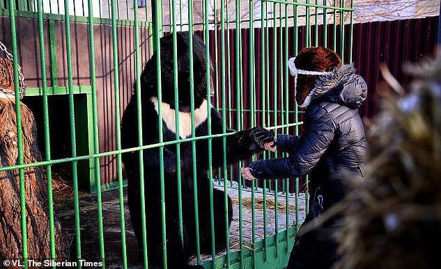 Nổi tiếng với khả năng có thể tương tác và hôn gấu ở vườn thú, người phụ nữ bị chính con vật này tấn công đến mất một chân - Ảnh 3.