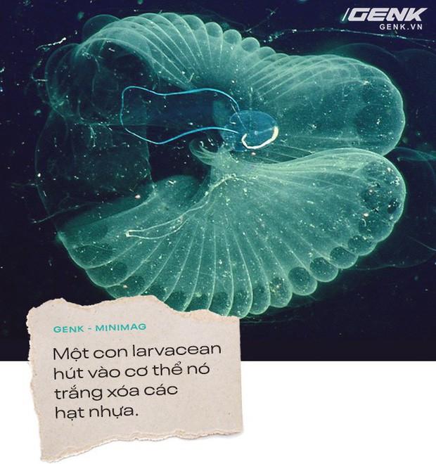 Hạt vi nhựa: Nỗi xấu hổ về nền văn minh của chúng ta với hậu thế - Ảnh 6.