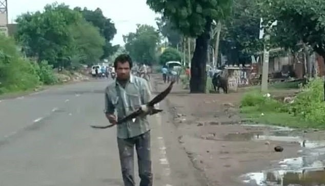 Làm phúc phải tội, người đàn ông Ấn Độ bị hàng trăm con quạ tấn công suốt 3 năm liền - Ảnh 1.