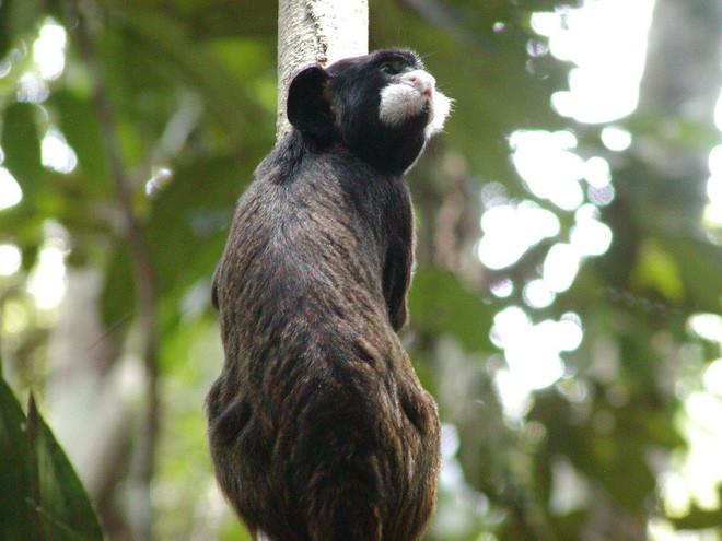 Trước khi cháy kỷ lục xảy ra, rừng Amazon đã kiên cường chống trả sự xâm lấn của con người chỉ nhờ một chiến binh tí hon - Ảnh 5.