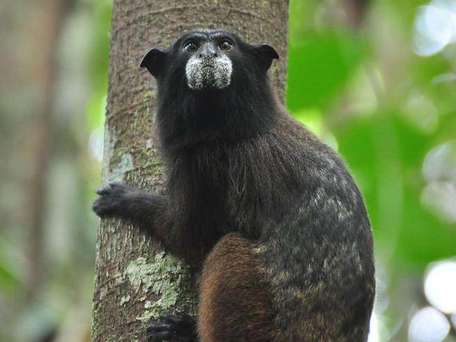 Trước khi cháy kỷ lục xảy ra, rừng Amazon đã kiên cường chống trả sự xâm lấn của con người chỉ nhờ một chiến binh tí hon - Ảnh 6.