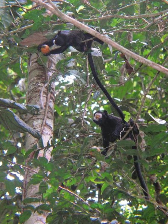 Trước khi cháy kỷ lục xảy ra, rừng Amazon đã kiên cường chống trả sự xâm lấn của con người chỉ nhờ một chiến binh tí hon - Ảnh 7.