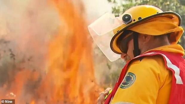 Khoảnh khắc xúc động khi gấu koala mẹ không màng đau đớn, cố bảo vệ đứa con nhỏ khỏi đám cháy xung quanh - Ảnh 2.