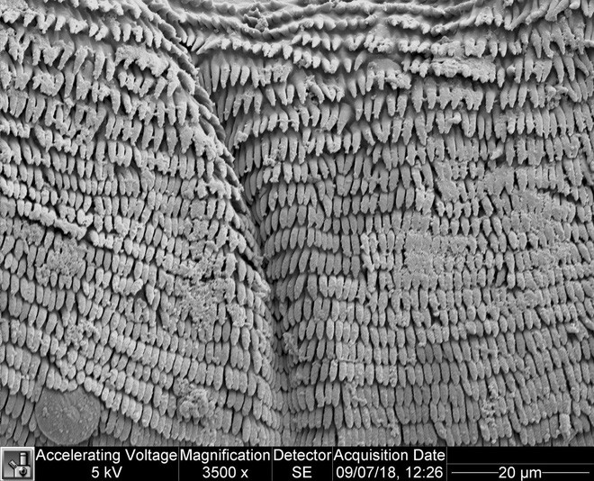 Vật lý trong thế giới động thực vật: Ấu trùng nhảy cao, tôm bọ ngựa đấm vỡ bể kính và cây phỉ Tàu nhổ hạt như đạn bắn - Ảnh 6.