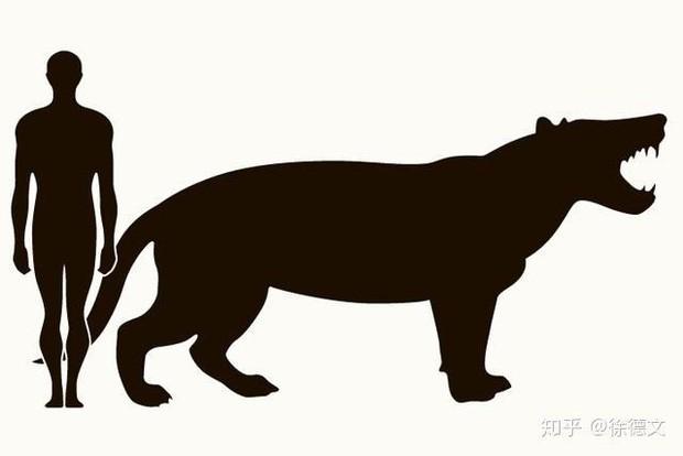 Loài động vật có vú ăn thịt lớn nhất trên đất liền, được mệnh danh là máy xay thịt di động - Ảnh 1.