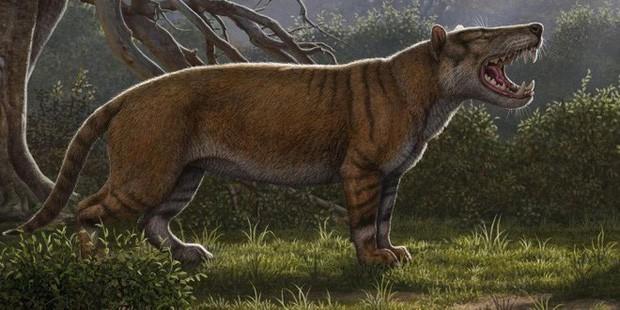 Hình ảnh phục dựng của Simbakubwa kutokaafrika.