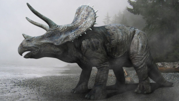 Hình 3D của loài khủng long 3 sừng Triceraptops được các nhà khoa học phục dựng lại