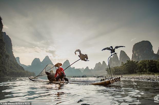 Loạt hình ảnh lão ngư bắt cá bằng chim cốc độc đáo khó rời mắt trong khung cảnh đẹp như tranh thủy mặc - Ảnh 2.