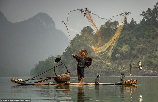 Loạt hình ảnh lão ngư bắt cá bằng chim cốc độc đáo khó rời mắt trong khung cảnh đẹp như tranh thủy mặc - Ảnh 3.