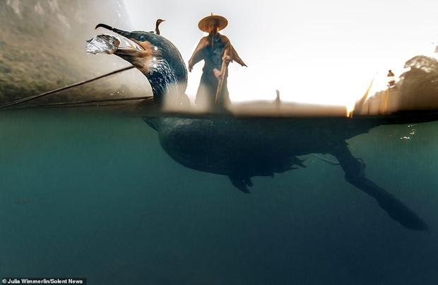 Loạt hình ảnh lão ngư bắt cá bằng chim cốc độc đáo khó rời mắt trong khung cảnh đẹp như tranh thủy mặc - Ảnh 4.