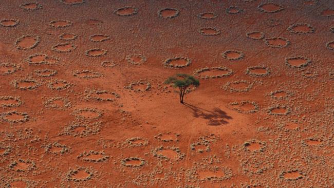 Những vòng tròn kỳ bí trong sa mạc Namib - Ảnh 1.