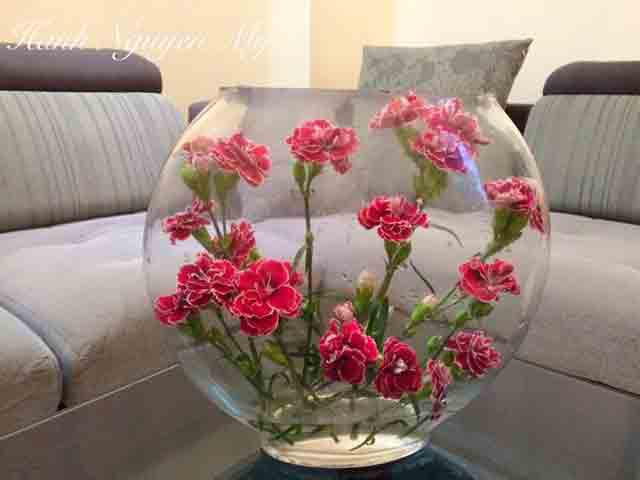Vừa dễ cắm lại vừa đẹp, hoa cẩm chướng chính là loại hoa không thể thiếu trong ngày Tết - Ảnh 31.